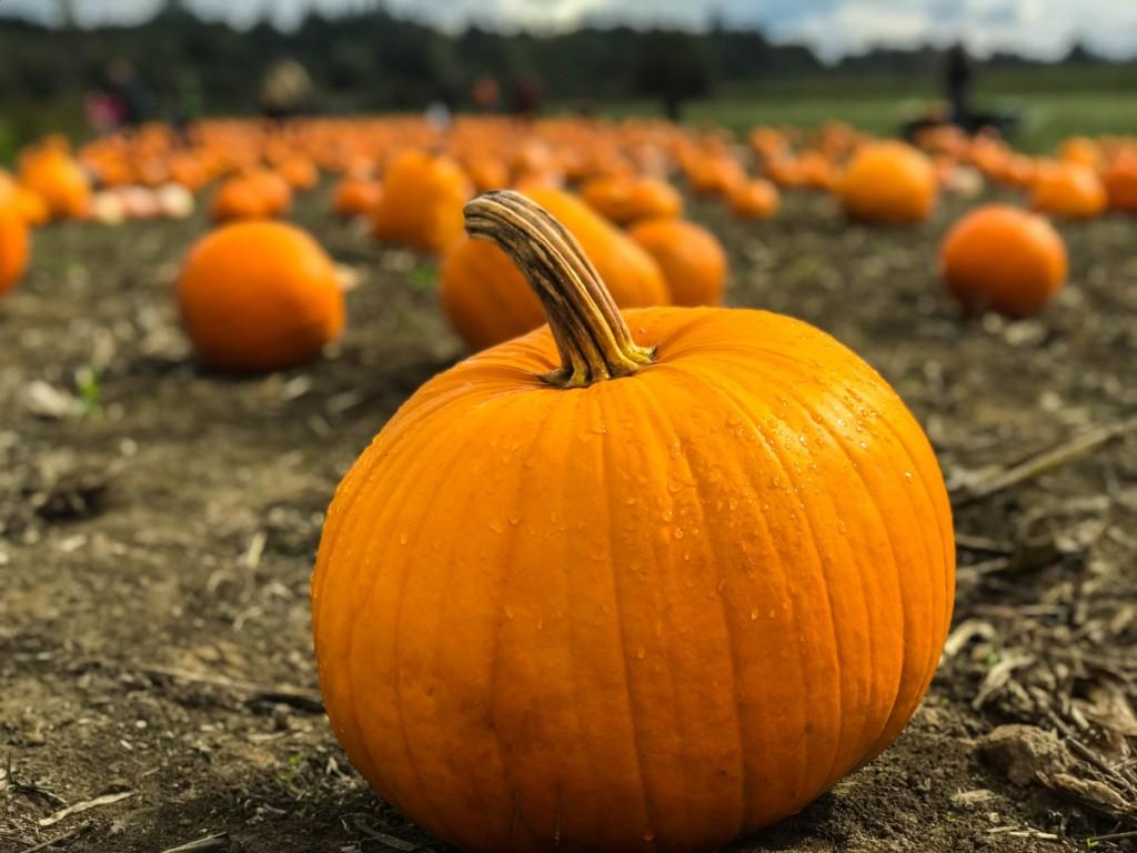 Pumpkin Patch Trains